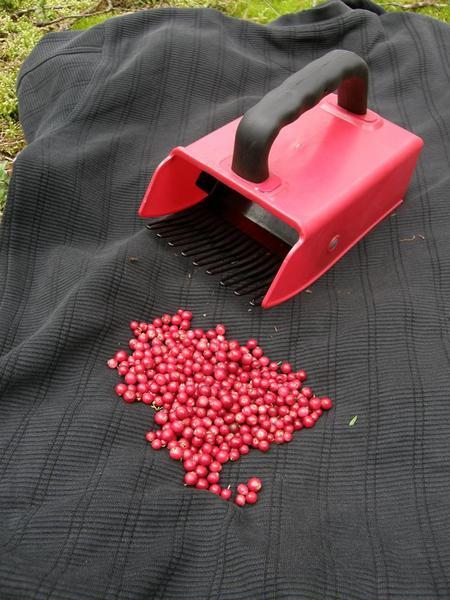 Набирушка для ягод своими руками