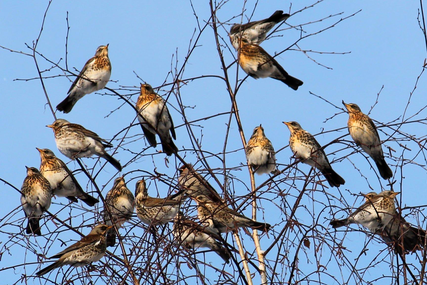 какие птицы первые прилетают на юг фото так между