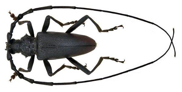 пауки беларуси фото и названия