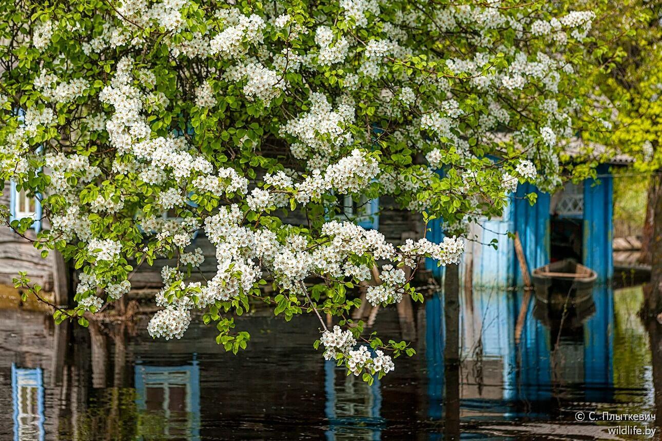 Innondation printanière et jardin fleurissant