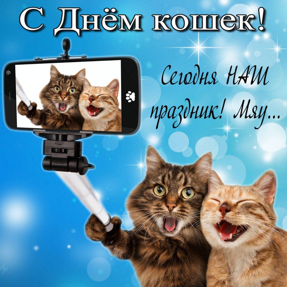 этом спинка поздравления с всемирным днем кошек 8 августа принимаем