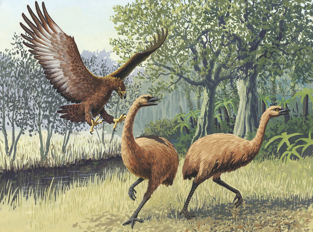 Giant-Haasts-eagle-attacking-New-Zealand-moa.jpg