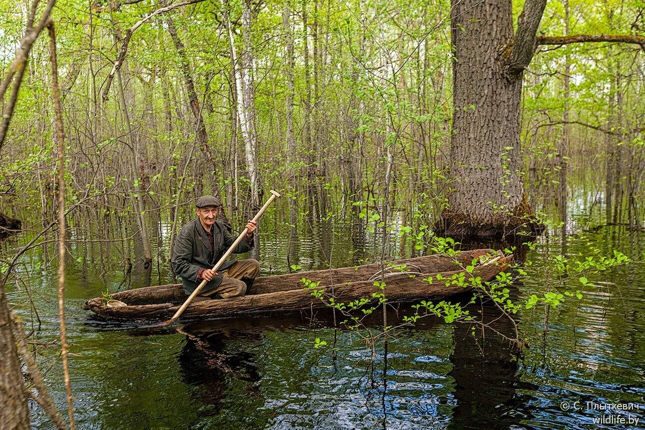 un Polésien âgé navigue parmi les chênes innondés