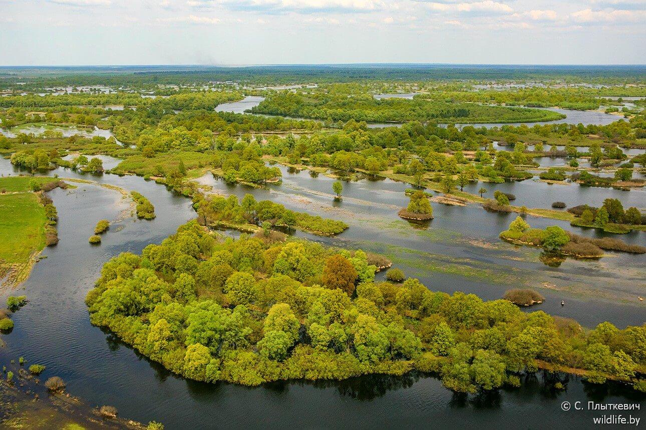Le lit des eaux de la Pripiat dans le parc national Prypiatsky