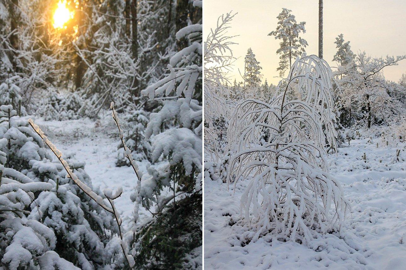 Зимой и кончается год