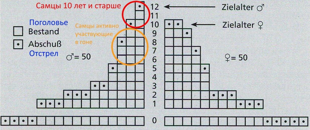 піраміда 1.jpg