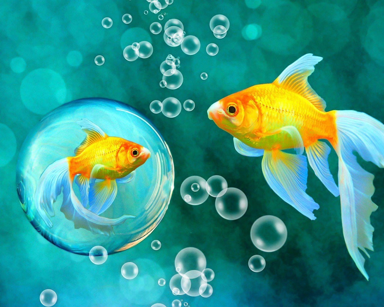 gold-bubbles-goldfish-bokeh-underwater-fishes-sea-1280x1024-wallpaper.jpg