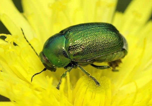 все жуки беларуси фото помещении