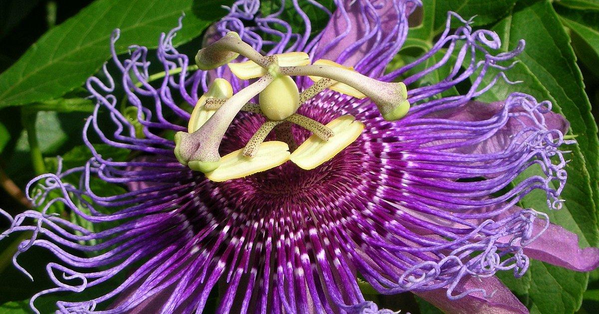 Самые странные цветы в мире