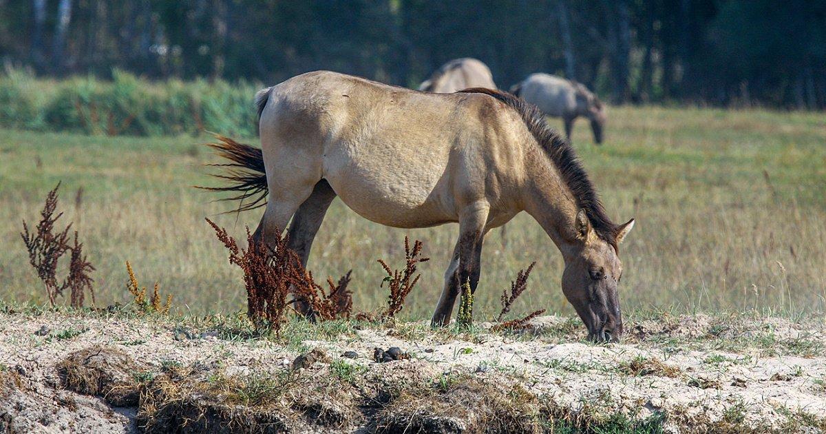 Дикие лошади Европы. Часть первая